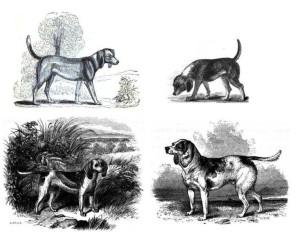 766px-4-beagles